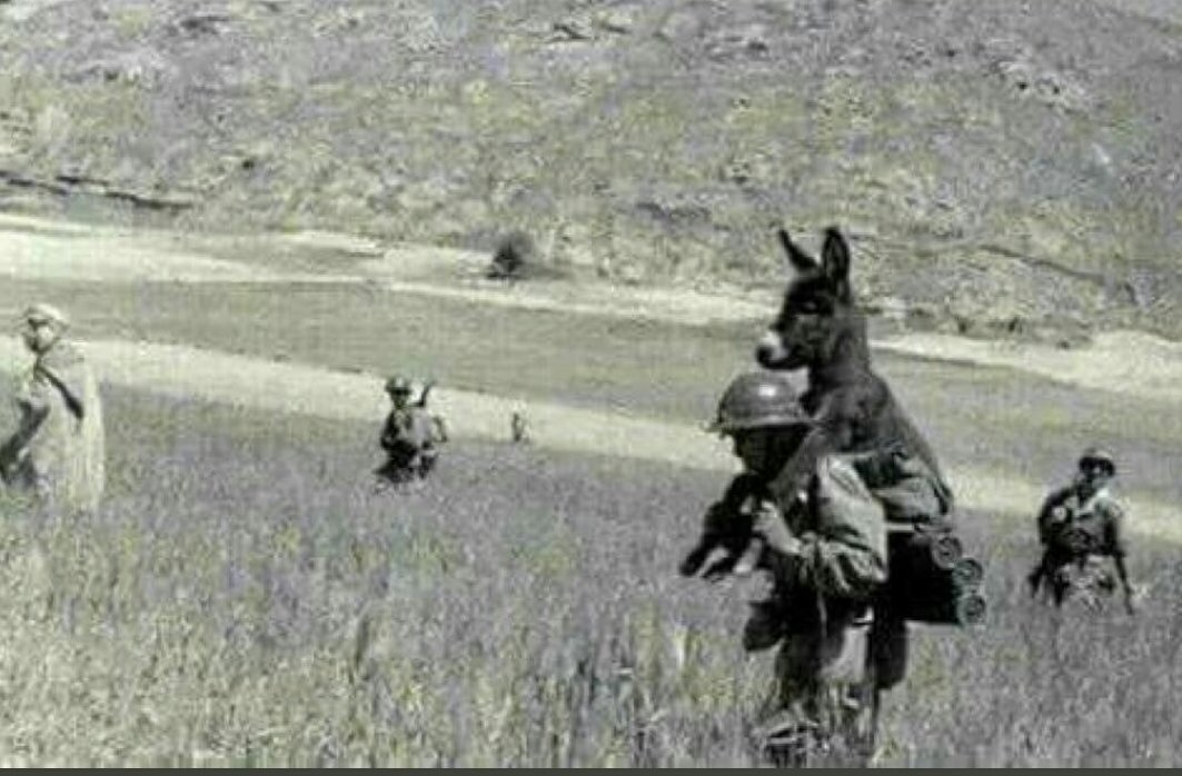 mule-deployed-to-soldier